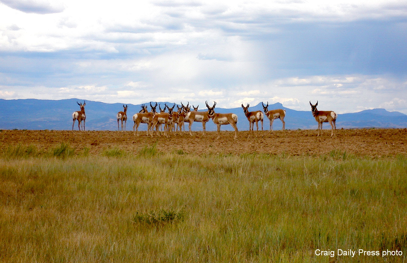 Antelope on horizon